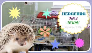 What Heat Lamp To Use For Hedgehogs by C U0026c Hedgehog Cage Tour Youtube