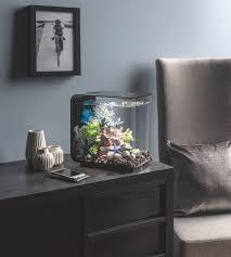 nano aquarium einrichten ideen und tipps für den kleinen