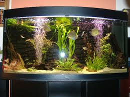 juwel aquarium vision 260 skirmishband s planted tanks details and photos photo 2326