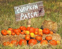 Oklahoma Pumpkin Patches by Orlando Pumpkin Patches 2017 Mycentralfloridafamily Com