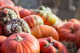 Pumpkin Picking Maine by Best Fall Foliage Route In Midcoast Maine Coastal Collage