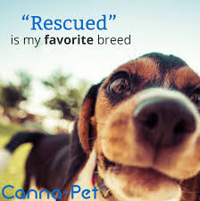 Canna-Pet: Purchase Canna-Pet® Today For Your Chance To Win A FREE ... Best Cbd Oil For Dogs In 2019 Reviews Of The Top Brands And Grateful Dog Treats Canna Pet King Kanine Coupon Code Review Pets Codes Promo Deals On Offerslovecom Hemppetproducts Instagram Photos Videos Cbd Voor Die Diy Book Marketing Buy Cannabis Products Online Mail Order Dispensarygta April 2018 Package Cannapet Advanced Maxcbd 30 Capsules 10ml Liquid V Dog Coupon Finder Beginners Guide To Health Benefits Couponcausecom Purchase Today Your Chance Win A Free Cbdcannabis Hashtag Twitter