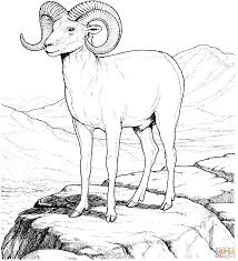 Rocky Mountain Bighorn Sheep Coloring Page And