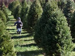 When Buying A Tree Outdoors Be Aware That The Sky
