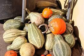Pumpkin Patch Hammond La by Pumpkin Love U2026 Forever