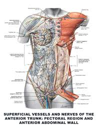 The Anatomy Coloring Book Fresh Muscles Heathermarxgallery