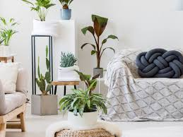 pflanzen dekorieren so setzt ihr euer grün perfekt in szene