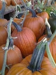 Best Pumpkin Patch In San Bernardino County by 60 Best Yucaipa Images On Pinterest Yucaipa California Bright