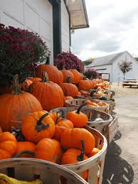 Pumpkin Picking Pa by Blog Posts Fashionably Short