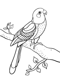 Printable Parrot Coloring Page Free PDF Download At Coloringcafe