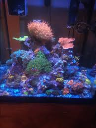 Show Off Those Great CUBE TANK AQUASCAPES! | Page 3 | REEF2REEF ... Home Design Aquascaping Aquarium Designs Aquascape Simple And Effective Guide On Reef Aquascaping News Reef Builders Pin By Dwells Saltwater Tank Pinterest Aquariums Quick Update New Aquascape Of The 120 Youtube Large Custom Living Coral Nyc Live Rock Set Up Idea Fish For How To A Aquarium New 30g Cube General Discussion Nanoreefcom Rockscape Drill Cement Your Gmacreef Minimalist 2reef Forum