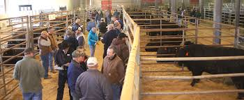 Clemson Bull Test Draws Record Crowd, Prices   Clemson University ... Davidson Jackpot 74z Salebook Bull Barn Saler Semen Competive Edge Genetics Abs Global Inc Bovine Reproduction Services And December 2011 Horizons By Genex Cooperative Issuu Lookout Mountain Llc Home Facebook Znt Cattle Co 2012 44 Arsenal 4w07 Kittle Farms Hart Star 35y43 For Sale 2014