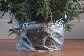 Saran Wrap Christmas Tree With Ornaments by Diy Plant Your Christmas Tree In The Garden Gardenista