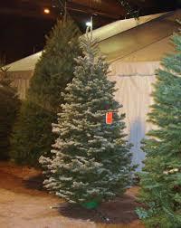 Flocking Artificial Christmas Trees by Deerbrooke Farm Photo Gallery Premium Christmas Tree Lot In Las