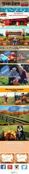 Waldorf Maryland Pumpkin Patch by As 25 Melhores Ideias De Pick Your Own Pumpkins Só No Pinterest