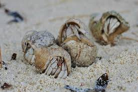 what s wrong with buying hermit crabs photos peta kids