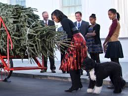 What Christmas Tree Smells The Best by Don U0027t Kill Christmas A Tree For Michelle And The Girls And A
