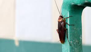 kakerlaken bekämpfen so geht s schöner wohnen