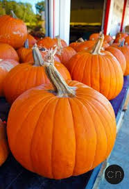 Pumpkin Patch Waco Tx 2015 by Pumpkin Festival At The Dallas Arboretum And Botanical Garden