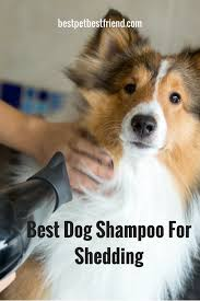 Excessive Hair Shedding In Dogs by Hair Today Gone Tomorrow Best Dog Shampoo For Shedding 2017