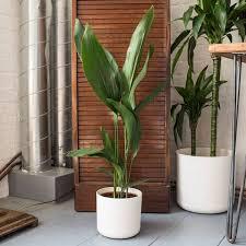 zimmerpflanzen die auch im dunklen bad gut gedeihen fresh