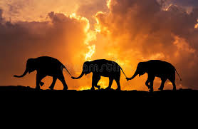 Silhouette Elephants Relationship With Trunk Hold Family Tail