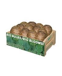 bulk flower bulbs cheap image collections flowers bouquet decoration
