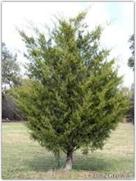 Christmas Tree Options The Choice Is Yours Gardening
