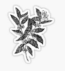 Coffee Plant Stickers