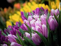 starts here now is the time to plant bulbs daily