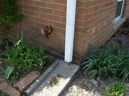 installing downspout drain lines ask the builderask the builder