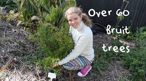 Pleasant Vlogger Tells Of Her Over 60 Fruit Trees On 1/8 Acre: A ... Backyard Farming Photo On Marvelous Fruit Trees Texas Plant A Tiny Orchard Hgtv Dwarf Peach Tree Peaches And Ctarines Pinterest 81 Best Pattern 170 Images On Garden And Berries In Small Mesmerizing 3 Fruit Trees For Small Space Yards Patios Youtube Backyards Gorgeous 135 Good For Yards Splendid Interesting Pics Decoration Inspiration Best To Grow Cool Glamorous Privacy Design 25 Ideas Patio