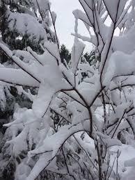Frasier Christmas Tree Cutting by Fraser Tree Farm In Ripon Wi 326 37th Ave Ripon Wi 54971 1