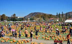 Pumpkin Patch In San Bernardino by Pumpkin Festival At Cal State Pomona Southern California Daily Photo