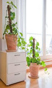nasa forscher raten eine dieser pflanzen sollte jeder im