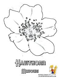 Missouri Hawthorn Flowers Coloring Drawings At YesColoring
