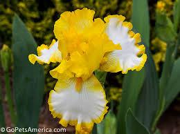 pictures of garden flowers