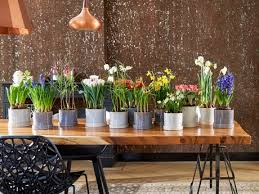 springtime bulbs march houseplants of the month