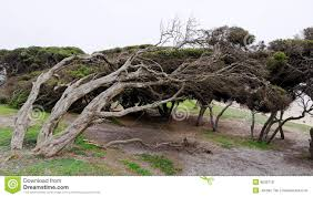 Bent Tree Trunks Stock Photo. Image Of Branch, Natural - 9630718 Expert Claims Mysterious Bent Trees Were Secret Native Americans Crooked Forest Wikipedia Stp77089 Greenery And Tree Trunks In Forest Karjat Mahashtra Indian Bent Trees History Or Legend Show Me Oz Larry The Lorry More Big Trucks For Children Geckos Garage New Trucks Bodies Equipment Trailers Seen At Wasteexpo How To Fix A Leaning Tree I Love The Wooden Beds Rarin To Go Ford Mysterious Are Actually American Trail Markers Wind Stock Images 542 Photos Bend Diamonds Ieee Spectrum Black White Alamy