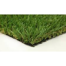 Carpet Grass Florida by Shop Grass U0026 Grass Seed At Lowes Com