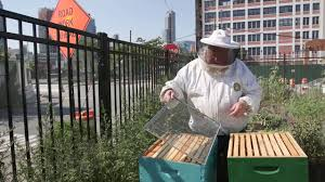 What Do I Need To Start A Beehive - How To Set Up A Beehive - YouTube Hive Time Products A Bee Adventure For Everyone Bkeeping Everything You Need To Know Start Your First Best 25 Raising Bees Ideas On Pinterest Honey Bee Keeping The Bees In Your Backyard Guide North Americas Joseph Starting Housing And Feeding Top Bar Beehive Projects Events Level1techs Forums 562 Best Images Knees 320 Like Girl 10 Mistakes New Bkeepers Make Splitting Hives Increase Cookeville Bkeepers Nucleus Colony Or How A 8 Steps With Pictures