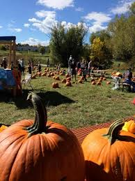 Denver Area Pumpkin Patches by The 25 Best Pumpkin Patch Denver Ideas On Pinterest Pumpkin