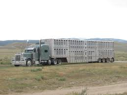 Biggest Cattle Truck. | Trucks | Pinterest | Cattle, Big And Rigs Livestock Transportation Basics Truckdrivingjobscom July 2017 Trip To Nebraska Updated 3152018 Big Timber Montana Pt 4 Job Posting Dicated Bull Hauler Steves Transport Facebook Minnesota Trucking Companies Mn Driver Benefits Package At Hunt Flatbed Youtube Stidham Inc Marbert Truck Carrying 78 Head Of Cattle Rolls Dash Camera Captures Footage Jobs Express