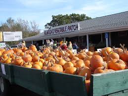 Pumpkin Patch Massachusetts by Looking For Pumpkin Patches Corn Mazes Hay Rides And Spooky Fun