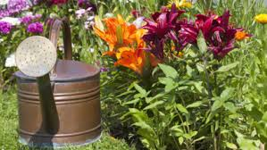 5 bulbs to plant in your garden now 皓 cbs st louis