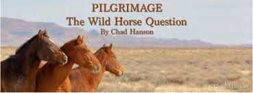 PILGRIMAGE The Wild Horse Question Cloud Foundation