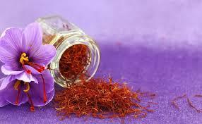 saffron hydroponically