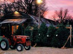 Owasso Christmas Tree Blackberry Farm by Start A New Tradition At Owasso Tree And Berry Farm Blackberries