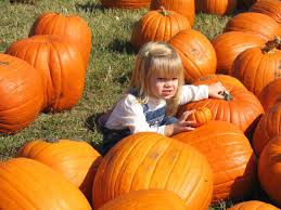 Pumpkin Patch Houston Oil Ranch by Pumpkin Patches Near Houston Your Cool City Houston
