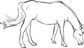 Printable Bella Sara Horse Coloring Pages Free From Mustangs To
